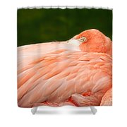 Flamingo With An Open Eye Shower Curtain
