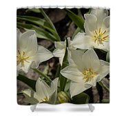 Open Tulip Time Shower Curtain