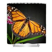 Open Wings Monarch Butterfly Shower Curtain