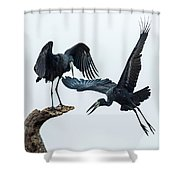 Openbill Storks Flying, Tarangire Shower Curtain