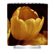 Opening Tulip Flower Golden Monochrome Shower Curtain