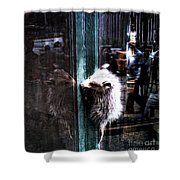 Opossum In The City Shower Curtain