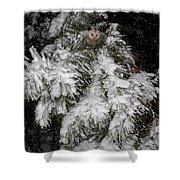 Opossum In The Pines Shower Curtain