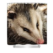 Opossum Shower Curtain