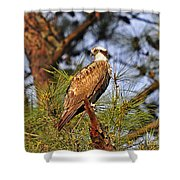 Opulent Osprey Shower Curtain by Al Powell Photography USA