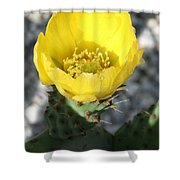 Opuntia Ficus-indica Flower Of The Prickly Pear Shower Curtain