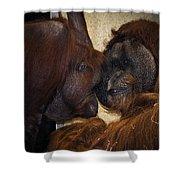Orangatang Love Shower Curtain