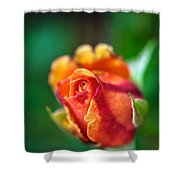 Orange And Fuschia Rosebud Shower Curtain
