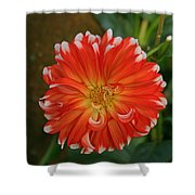 Orange And White Shower Curtain