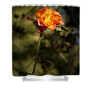 Orange And Yellow Rose Shower Curtain