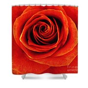 Orange Apricot Rose Macro With Oil Painting Effect Shower Curtain