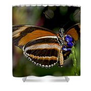 Orange Banded Butterfly Shower Curtain