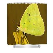Orange Barred Sulfur Butterfly Shower Curtain