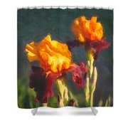 Orange Bearded Irises Shower Curtain