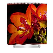 Orange Beauty Shower Curtain