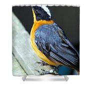 Orange Breasted Bird Portrait Shower Curtain