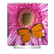 Orange Butterfly On Pink Daisy Shower Curtain