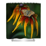 Orange Butterfly With Black Dots Sitting Onthe Red And Yellow Long Petaled Flowers Shower Curtain