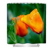 Orange California Poppies Shower Curtain