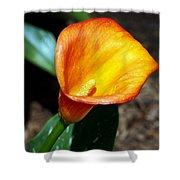 Orange Calla Lilly Flower In The Garden Shower Curtain