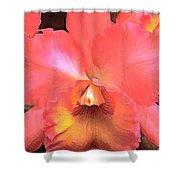 Orange Cattleya Orchid Shower Curtain