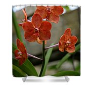 Orange Colored Orchid Shower Curtain