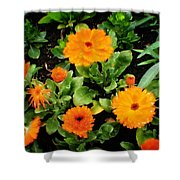 Orange Country Flowers - Series I Shower Curtain