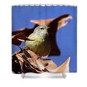 Orange-crowned Warbler - Feather Lite Shower Curtain