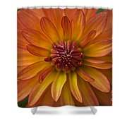 Orange Dahlia Blossom Shower Curtain