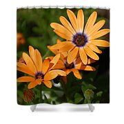 Orange Daisy Shower Curtain