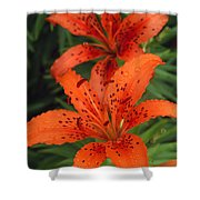 Orange Day Lilies Shower Curtain