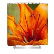 Orange Daylily Closeup Shower Curtain
