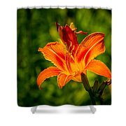 Orange Daylily Flower 3 Shower Curtain