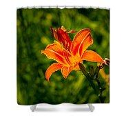 Orange Daylily Flower 4 Shower Curtain