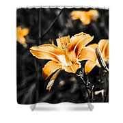 Orange Daylily Flowers On Gray 1 Shower Curtain
