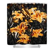 Orange Daylily Flowers On Gray 5 Shower Curtain
