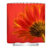 Orange Delight Shower Curtain