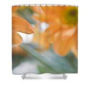 Orange Design. Paintrly Chrysanthemum  Shower Curtain