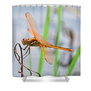 Orange Dragonfly On The Water's Edge Shower Curtain