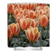 Orange Dutch Tulips Shower Curtain