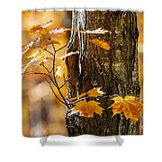 Orange Fall Maple Shower Curtain by Elena Elisseeva