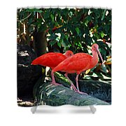 Orange Feathered Friends Shower Curtain