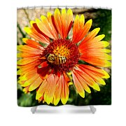Orange Fiery Gaillardia Flower And Bee Macro Shower Curtain
