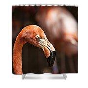 Orange Flamingo Shower Curtain
