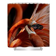 Orange Flamingos Conflict Resolution Shower Curtain