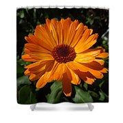 Orange Flower In The Garden Shower Curtain