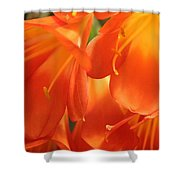 Orange Flower Petals Shower Curtain