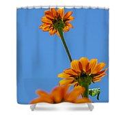 Orange Flowers On Blue Sky Shower Curtain