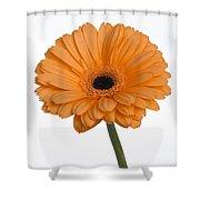 Orange Gerbera Daisy Shower Curtain
