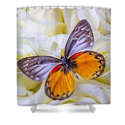 Orange Gray Butterfly Shower Curtain